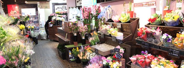 ショッピング・オランダ屋(株式会社ブルーミスト)・メイン写真