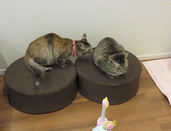 遊ぶ・趣味・猫の家・内観