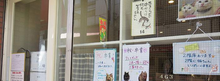 遊ぶ・趣味・猫の家・メイン写真